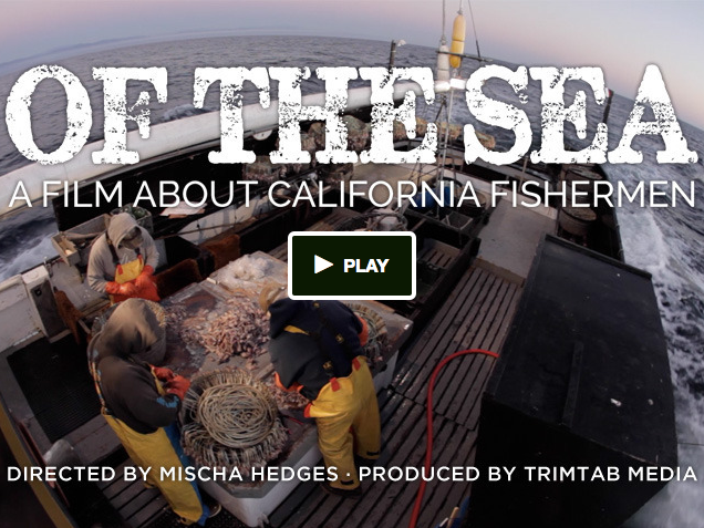 Our new film about seafood & sustainability