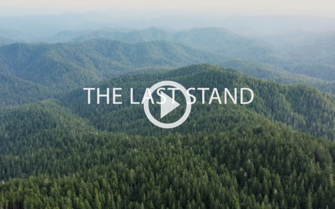The Last Stand – a short film to save 20,000 acres of redwood forest