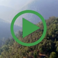 casestudy-forests
